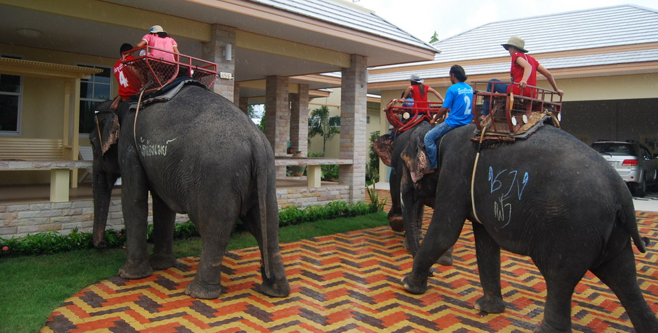 Satuk Elephants at Home for sale